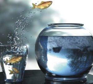 fishjump1